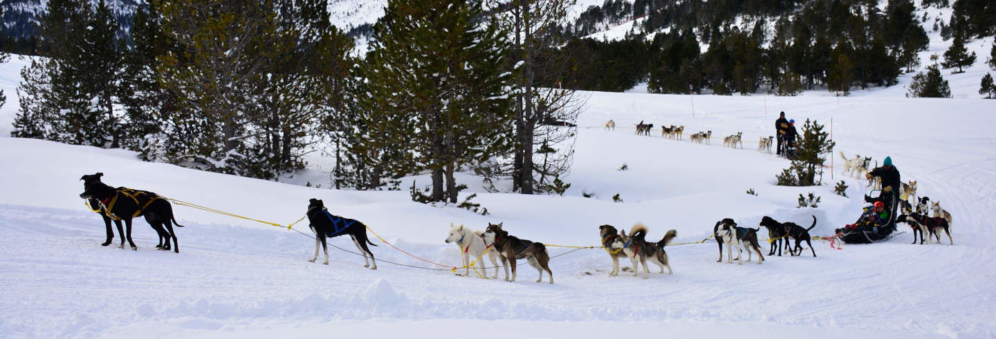 Grandvalira Dog Sled Ride