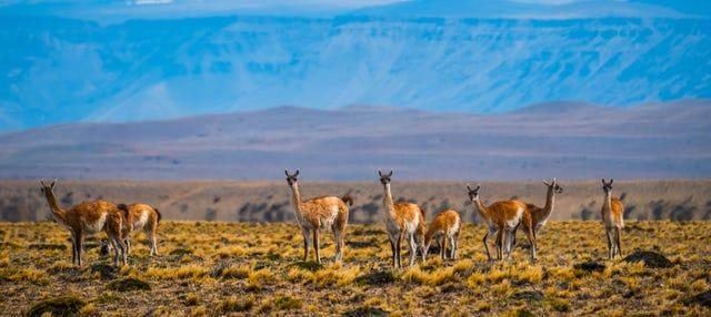 Safari por El Calafate