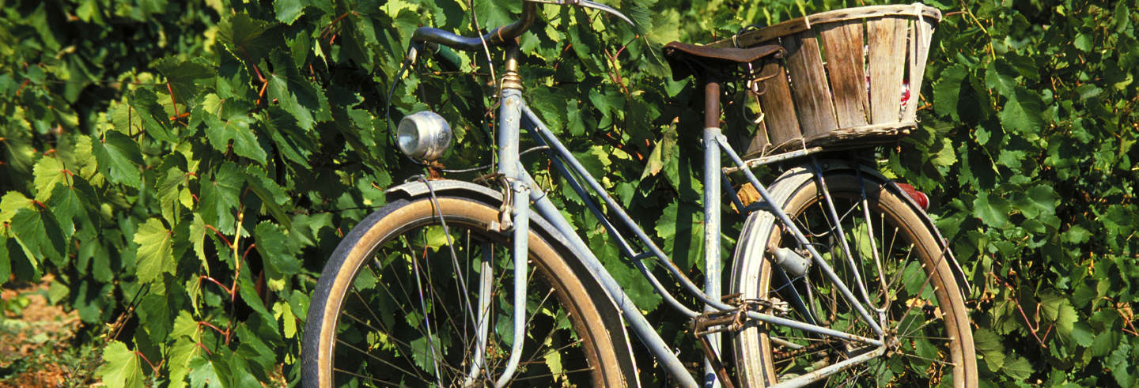 Alquiler de bicicleta en Maipú
