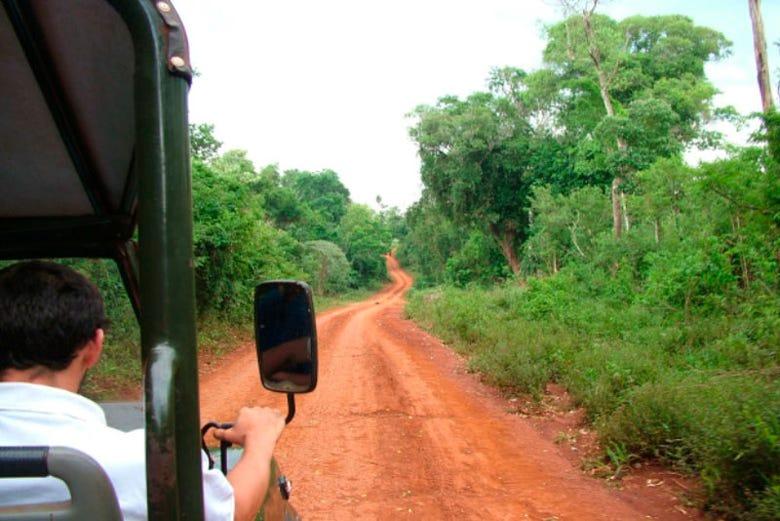 ,Excursión a Selva de Iguazú