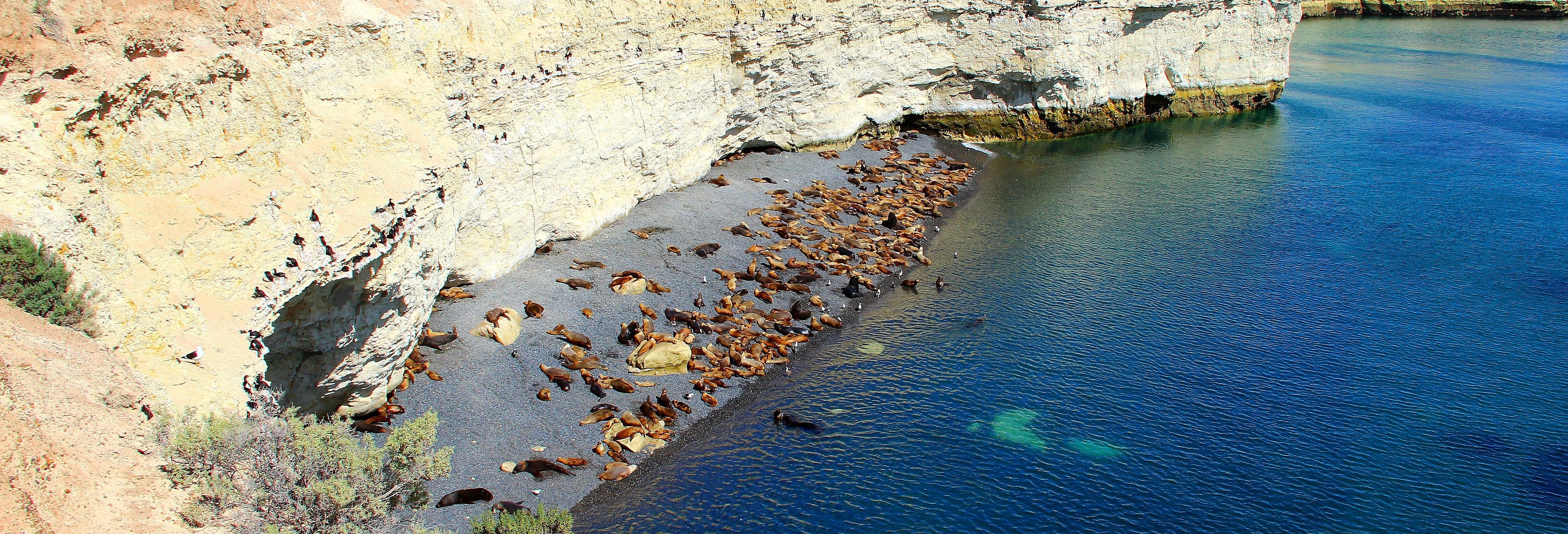 Avistamento de lobos-marinhos em Punta Loma