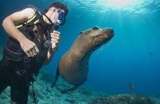 Immersione con i leoni marini a Punta Loma