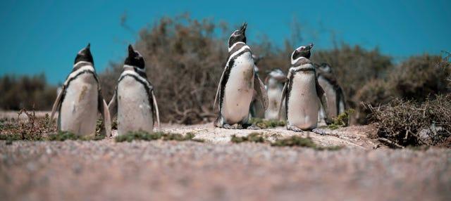 Estancia El Pedral y avistamiento de pingüinos