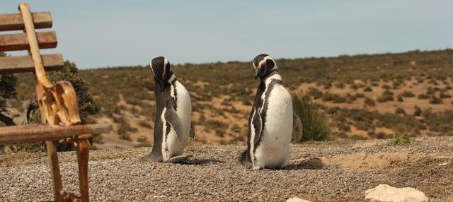 Excursión a Punta Tombo + Avistamiento de delfines