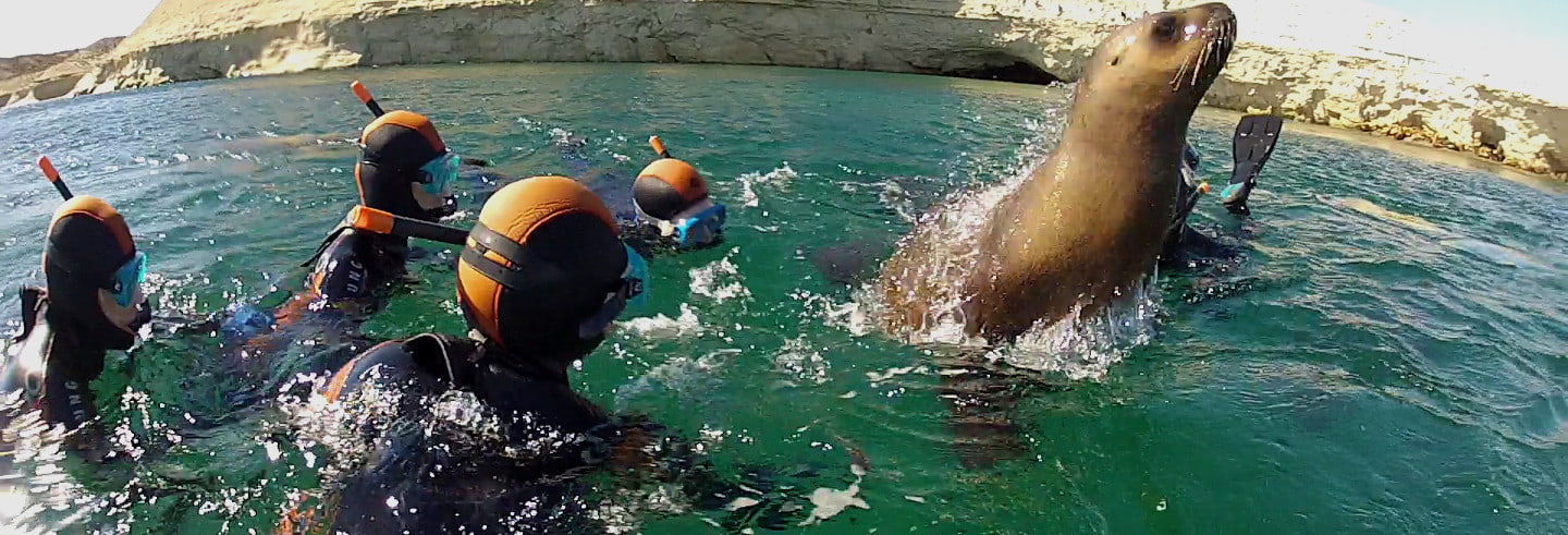 Snorkeling with Sea Lions in Punta Loma