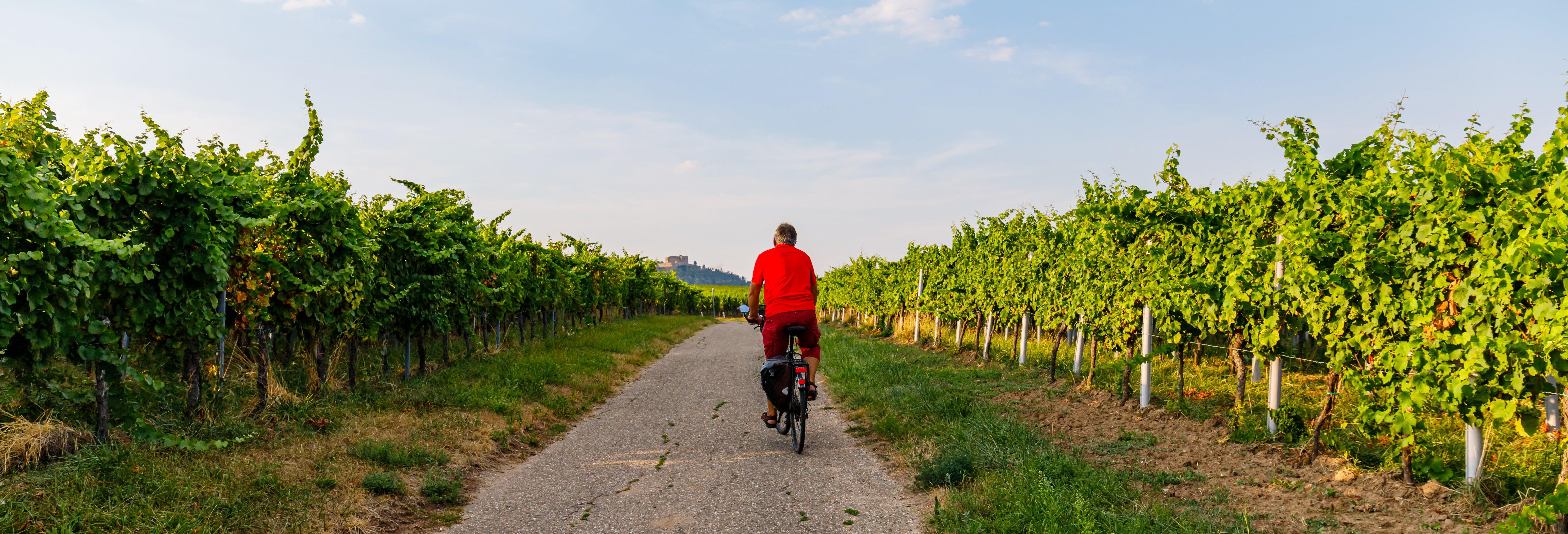 Mendoza Wine Bike Tour