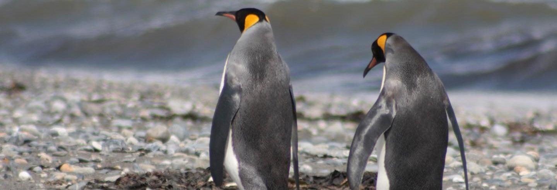 Tour de 3 dias pela Ilha Grande da Terra do Fogo