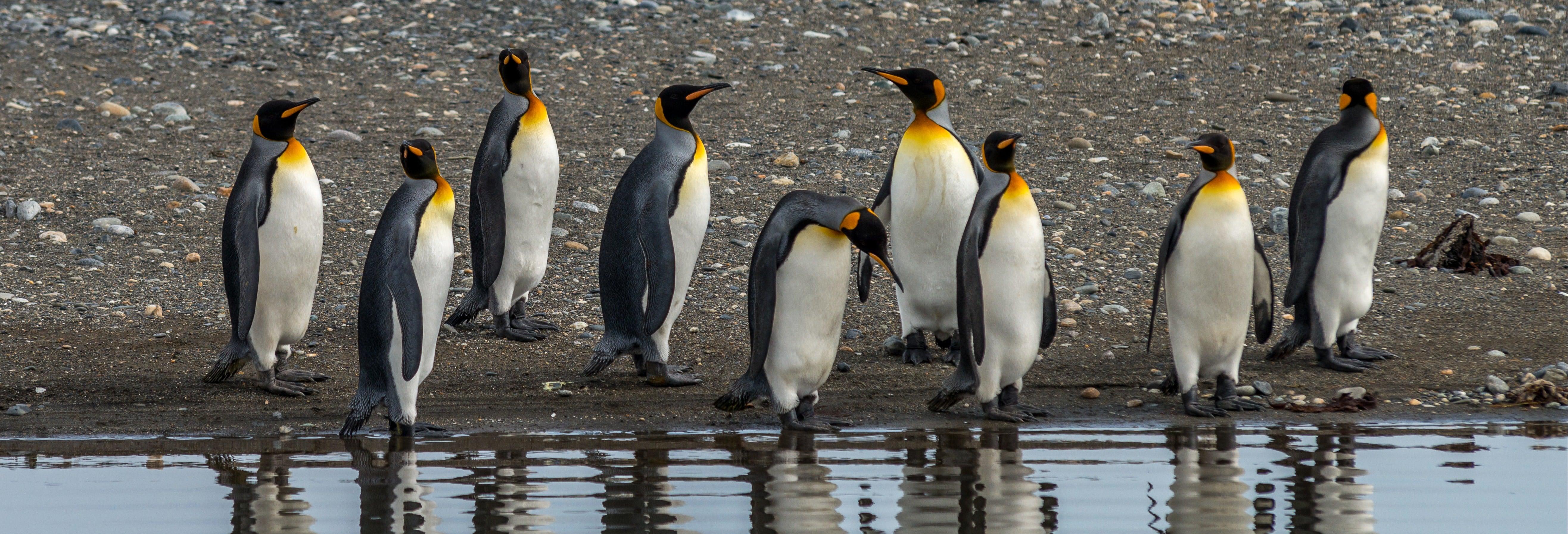 Tour de 4 días por Isla Grande de Tierra del Fuego