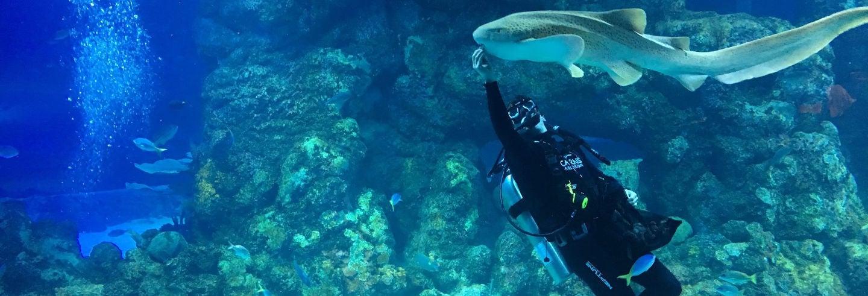 Ingresso do Aquário de Cairns