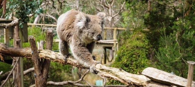 Entrada a los Parques Naturales de la Isla Phillip
