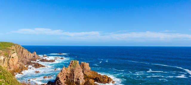 Paseo en barco por la isla Phillip