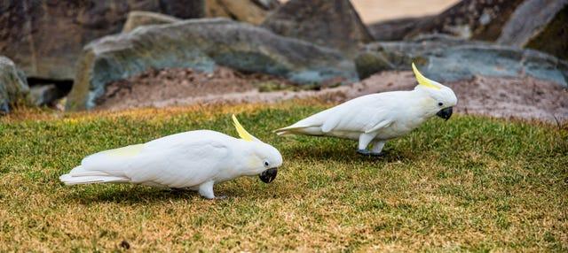 Entrada al zoo Werribee Open Range