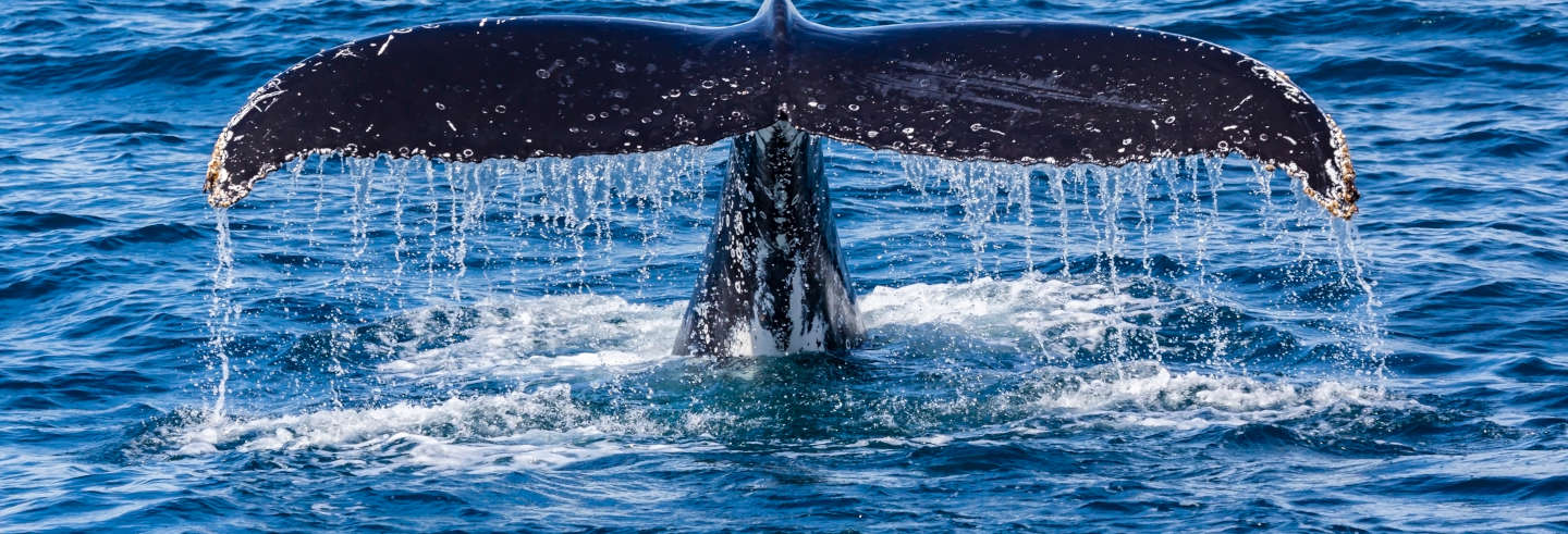 Avistamiento de ballenas en Perth
