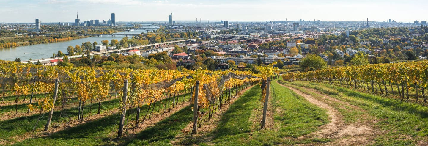 Vienna Vineyards, Danube Tower & Boat Trip