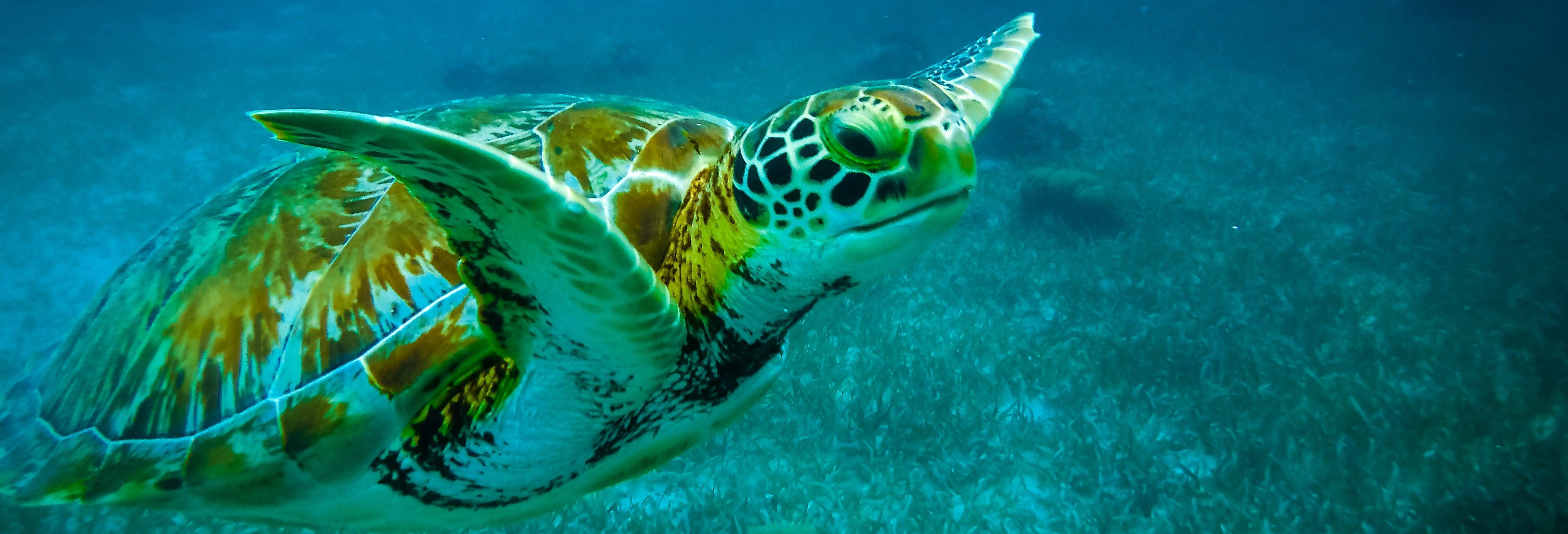 Snorkelling in Caye Caulker