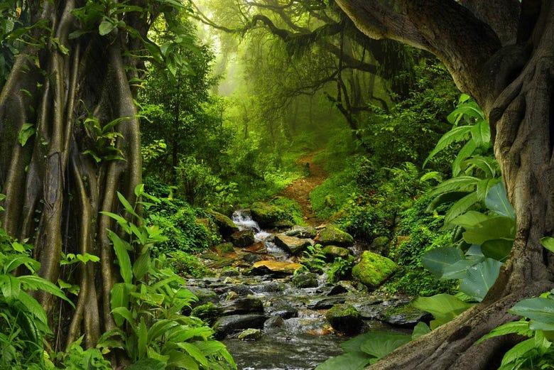 Tour De 3 Días Por La Selva Amazónica Desde Manaos