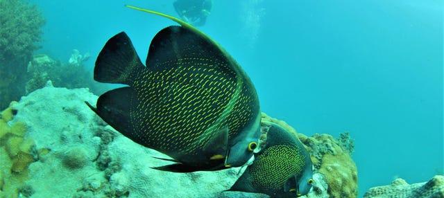 Buceo en Arraial do Cabo