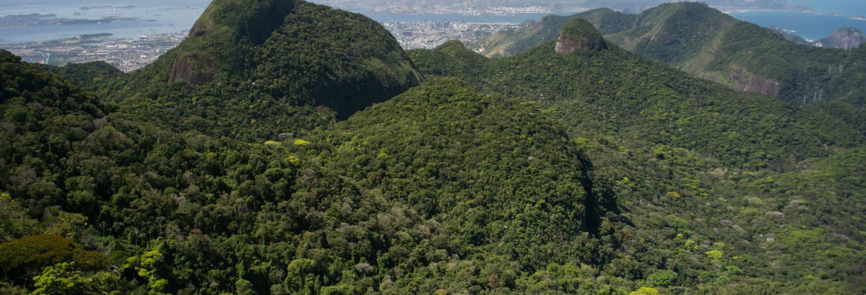 Tour en Jeep por el Parque Nacional Tijuca