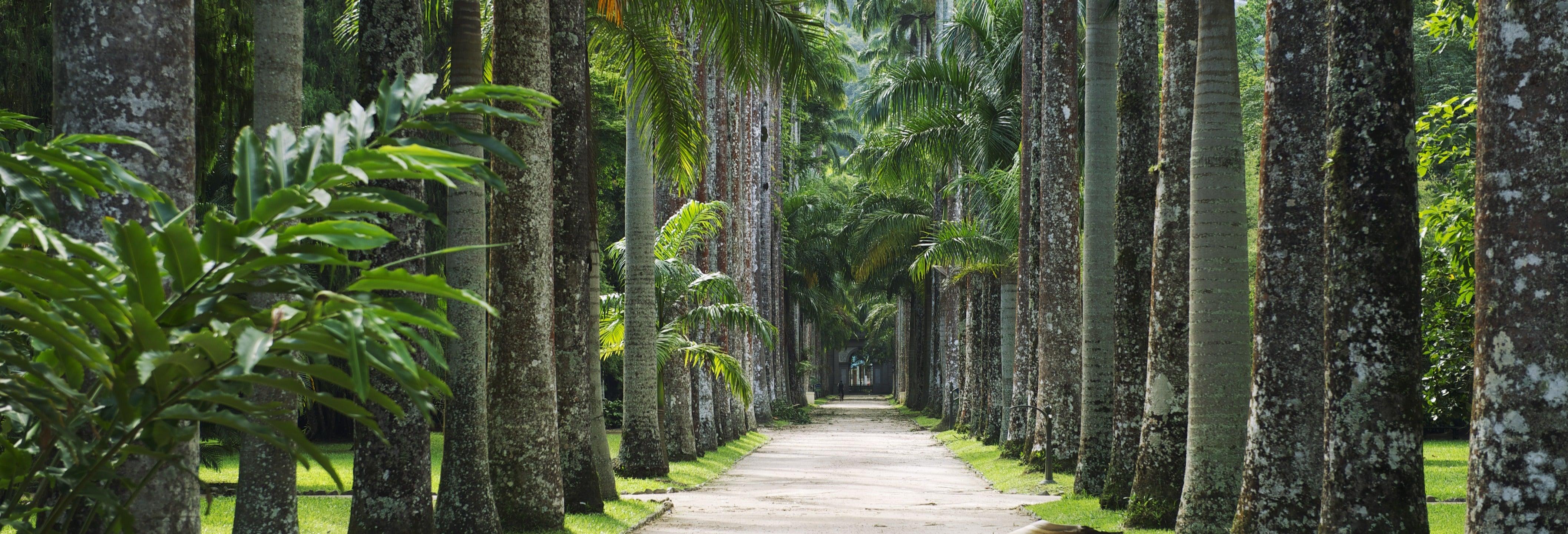 Visita guiada por el jardín botánico