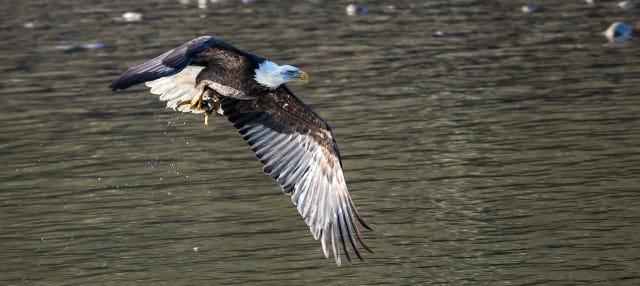 Paseo en barco con avistamiento de águilas