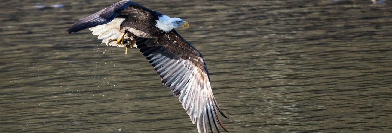 Passeio de barco com avistamento de águias