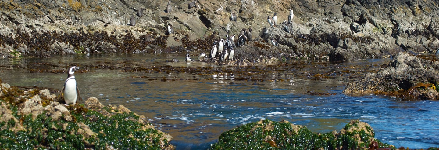 Chiloe Island and the Penguins of Puñihuil