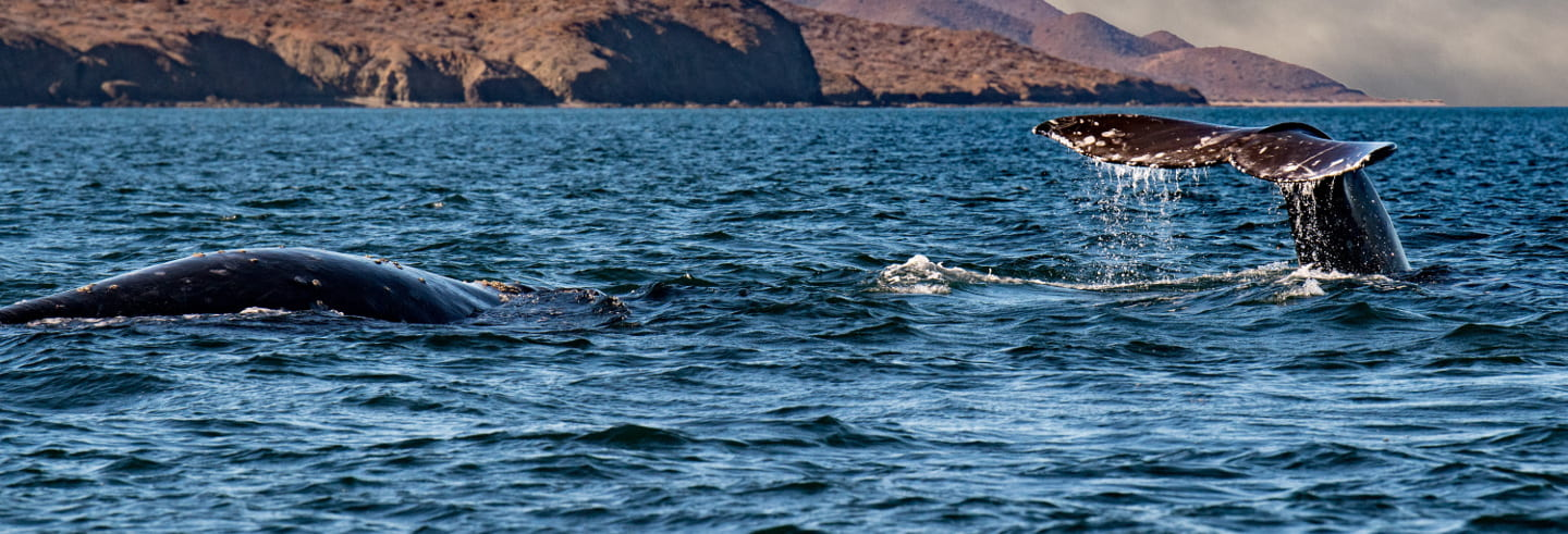 Whale Watching in Patagonia