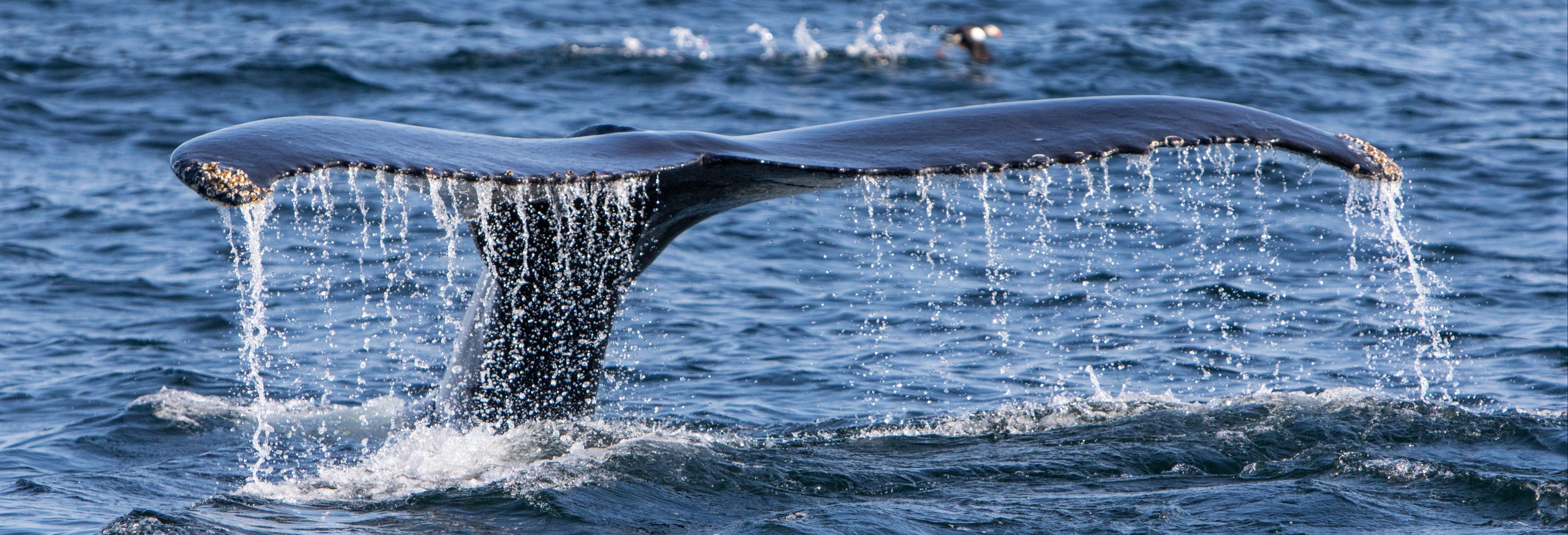 Avistamiento de ballenas en el estrecho de Magallanes