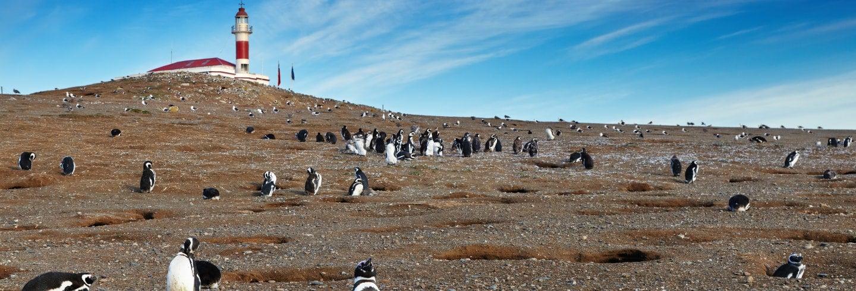 Avvistamento di pinguini sull'Isola Magdalena