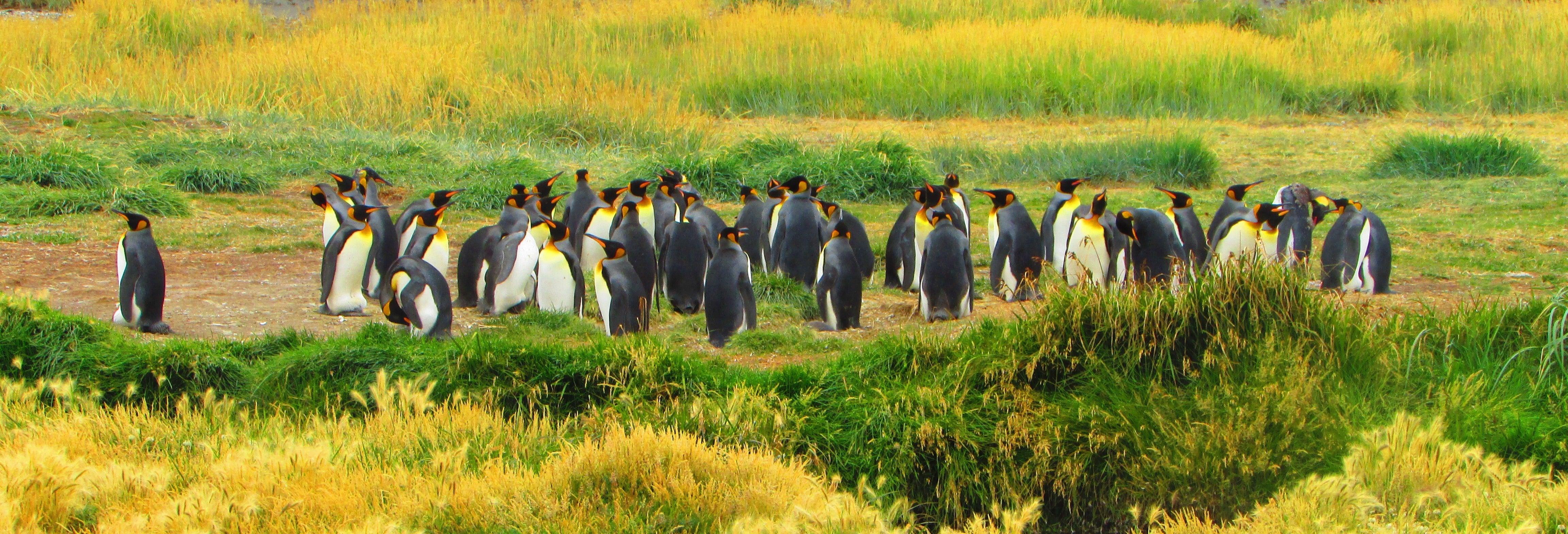 Excursión a la isla Tierra del Fuego
