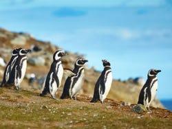 ,Avistamiento de Pingüinos en Isla Magdalena