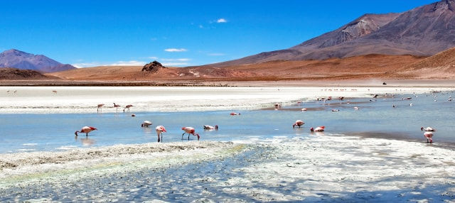 Excursión al Salar de Atacama y Toconao