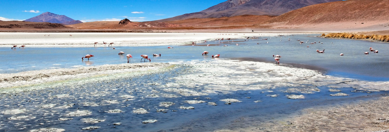 Salar de Atacama and Toconao Trip