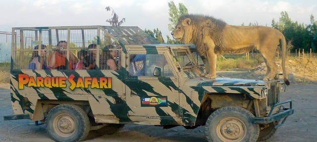 Excursión al Parque Safari de Rancagua