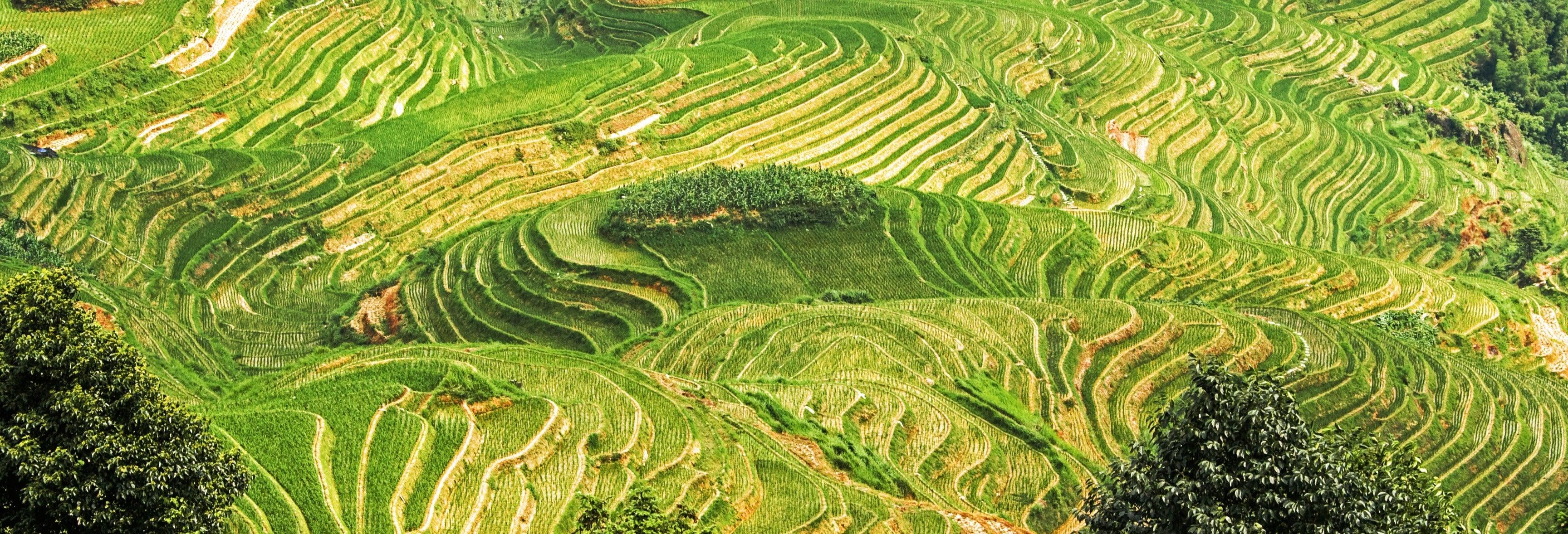Tour dei villaggi e delle risaie di Longji