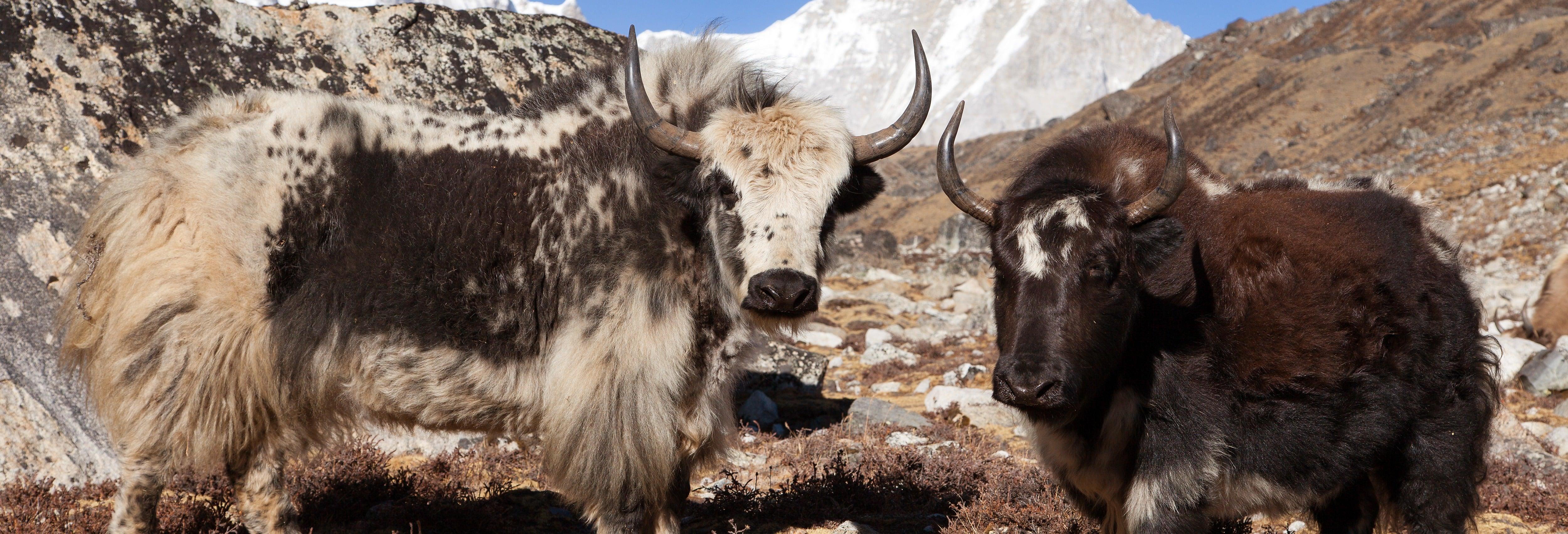 Circuito di 8 giorni: il meglio del Tibet
