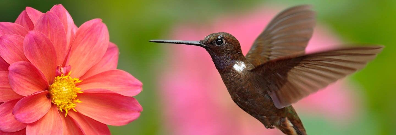 Avistamiento de aves en La Calera