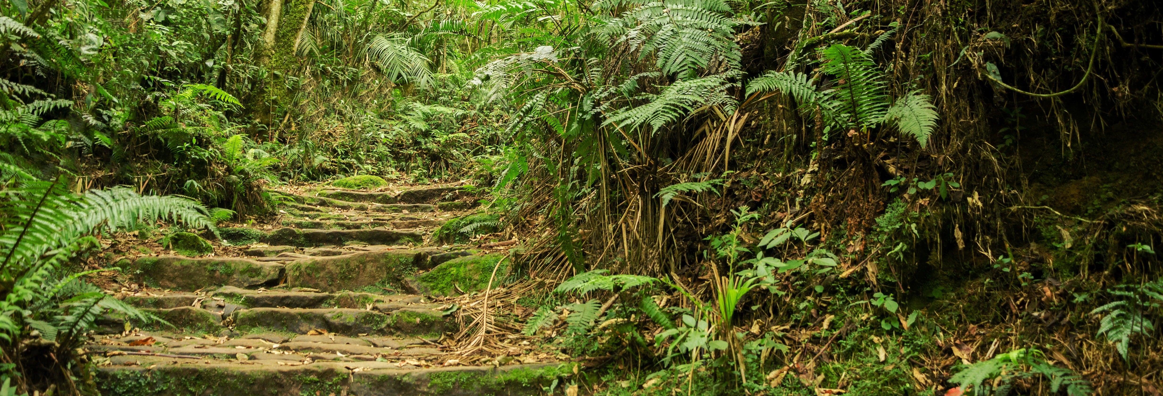 Excursión al Parque Natural Chicaque