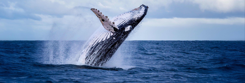 Avistamiento de ballenas en Buenaventura