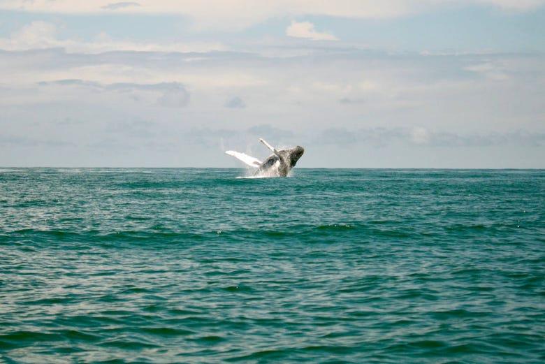 Observation de baleines à Buenaventura