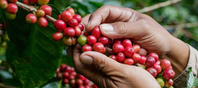 Tour del café por Antioquia
