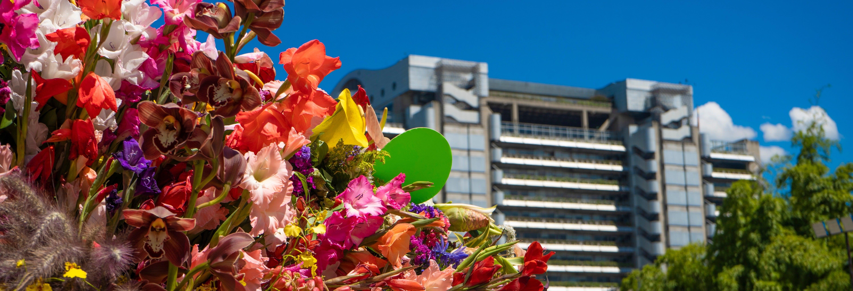 Tour das flores por Medellín
