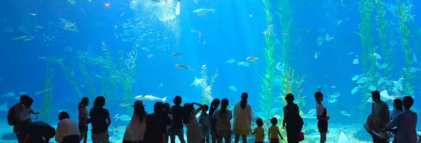 Billet pour l'Aqua Planet Jeju