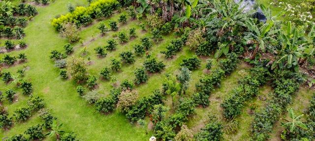 Tour do café e do chocolate