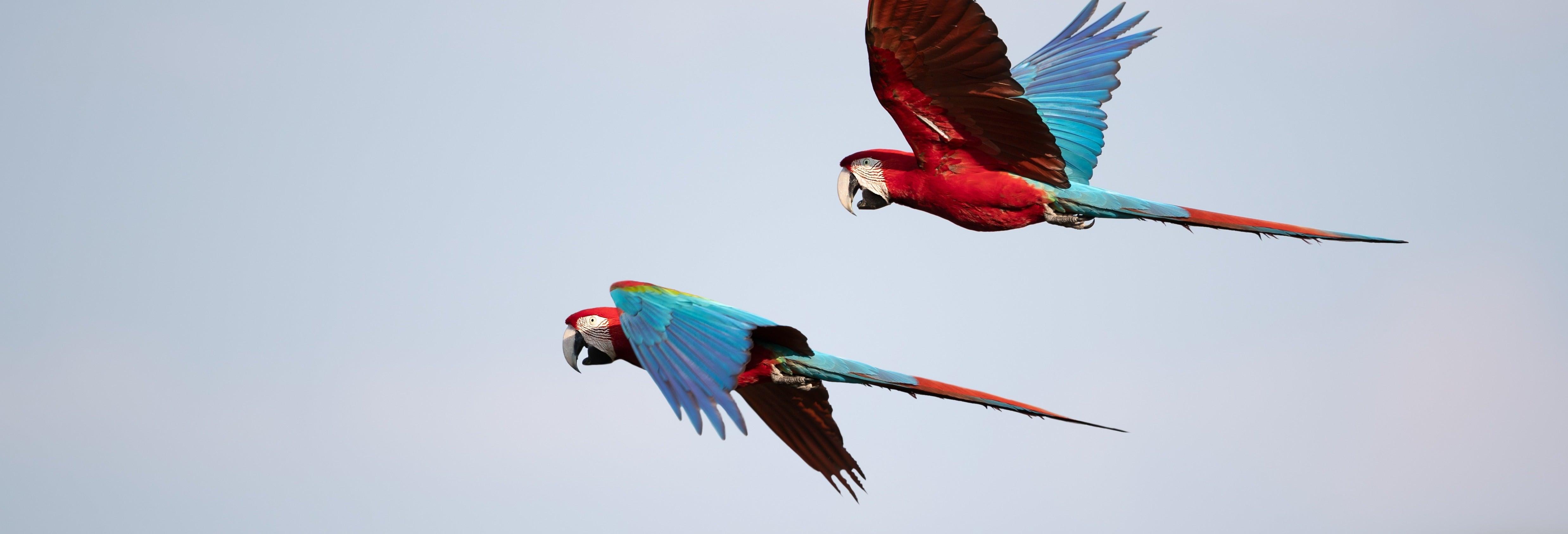 Avistamiento de aves en la finca Río Agujitas