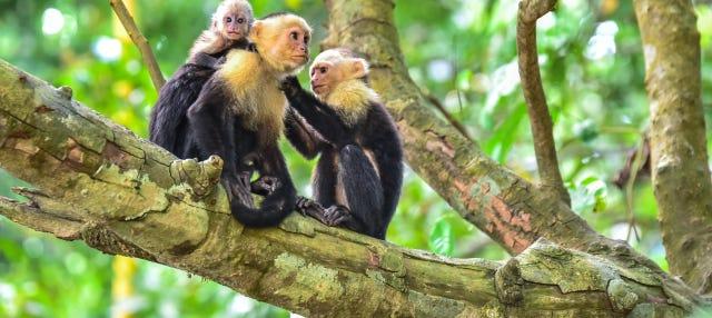 Excursión al Parque Nacional Manuel Antonio