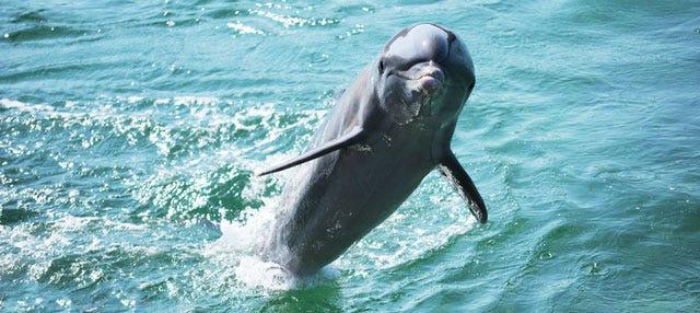 Nado con delfines en Varadero