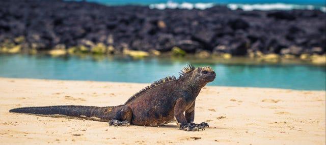 Circuito de 4 días por las islas Galápagos