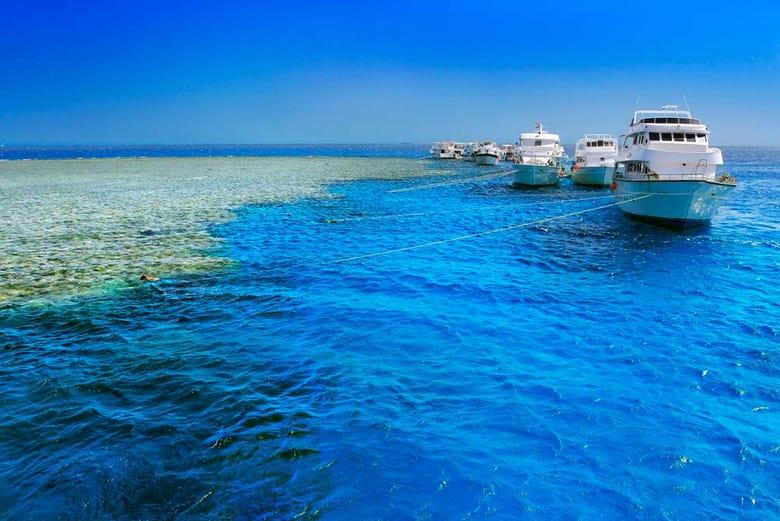 ,Excursión a Isla Giftun