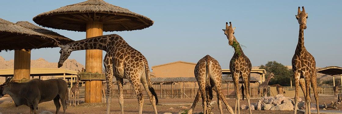 Zoológico de Dubai